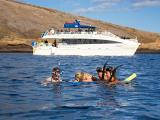 Molokini & Turtle Arches Snorkel Adventure